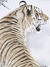 Tiger Drawings Art Vol.2