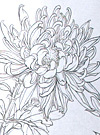 Chrysanthemum Flower Stencil Designs