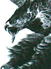 The Hawk and Eagle Tattoo Designs